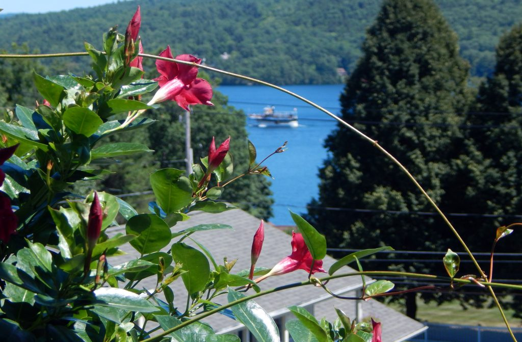 Flowers looking over Lake George